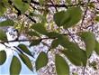 今年の桜はいいねぇ~