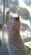 日差し猫パンチ
