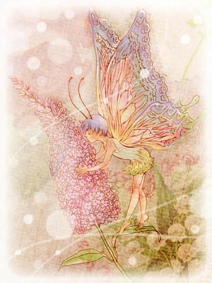 【線画×彩色】 塗り絵・バタフライブッシュ