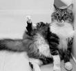 手袋をした化け猫