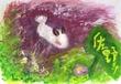 ゴマフビロードウミウシ