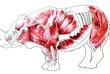 サイ筋肉図