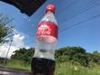 夏のコーラ