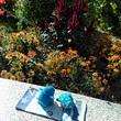 アデリーとジンベーと花壇