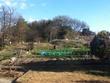 田舎にあるごく一般的な庭