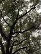 揺れる葉がガサガサと。