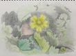 【古スケブ】毒イチゴの花