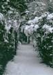 いつかの雪の日3