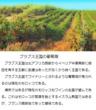 千年巫女の代理人 ブラブス王国の葡萄畑
