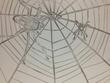 蜘蛛の巣。