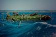クジラ娘と夏の海 挿絵4