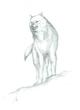 威嚇する狼 習作