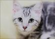 異世界 吾輩は猫である――甕の中で死ぬと最強の猫となって転生した