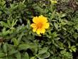 黄色い、お花さんのようにステキな1日を!