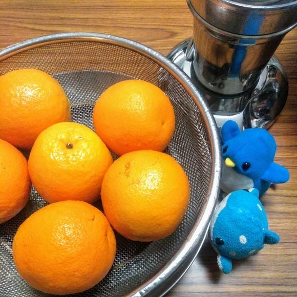 アデリーとジンベーとオレンジ
