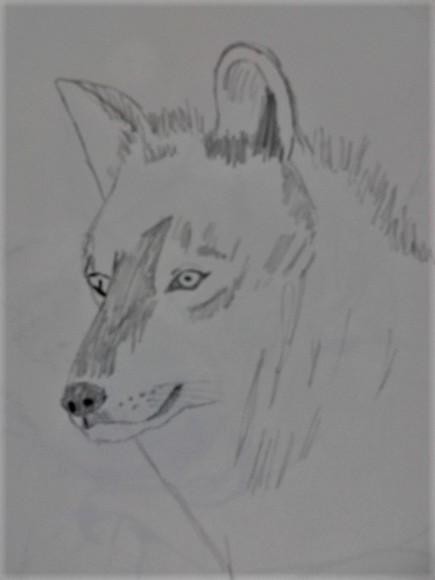 オオカミです。