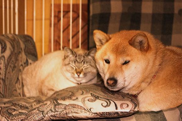 【猫の日】猫と犬