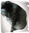 愛猫です<(_ _)>