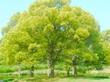 """""""はじまり""""の木。"""