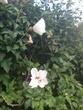 綺麗な花だったんだよねぇ~
