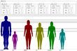 身長対比1
