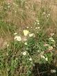 黄色いちょうちょとお花さん。