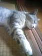 主の家に住みついているノラ猫です。