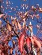 降ってきそうな落ち葉。