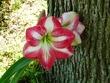 『カリブに咲く花の名は』 第17章 挿絵