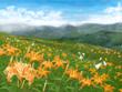 野萱草の咲く丘