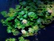 水面の花。