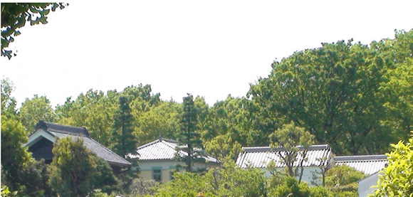 遠い木々に埋もれる屋敷