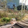 アデリーと花園