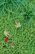 苔 と ジャノヒゲ と 落葉
