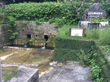 ヤンガー(湧泉)