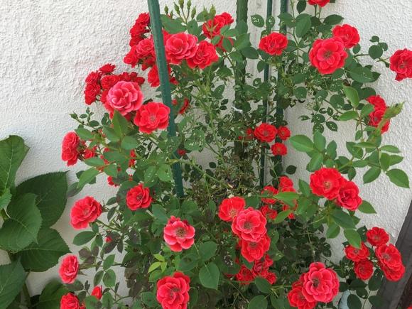 庭先に咲く花