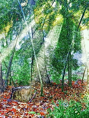 「胡桃の中の蜃気楼」地図 挿絵
