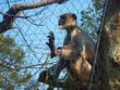 遠くを見る猿
