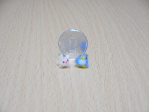 ミニアデリーとミニウサギと一円玉と背比べ