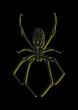 女郎蜘蛛  2