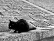 黒い猫(そのまんま)