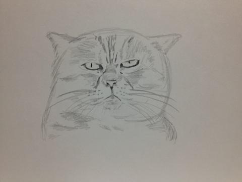 強面なネコ。