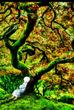 始まりの木の下