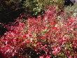 平湯大滝 紅葉