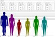身長対比3