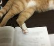 魔王、猫になる。 第36話 挿絵2