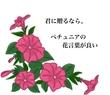 タイトル入① ペチュニア (月野夜様の小説タイトルをお借りして)