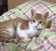 魔王、猫になる。 第4話 魔王、懐かしい夢を見る