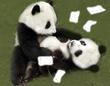 黒い読み聞かせ⑤「白黒つかなかったパンダの国会」