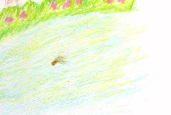 『落ちた綿毛』挿絵